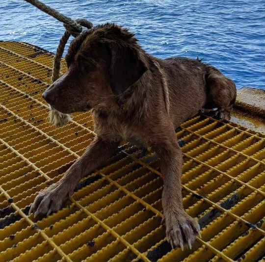 собака в океане 3