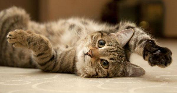 кошки левши или правши
