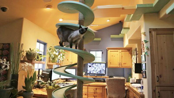 комната для кошек фото 1