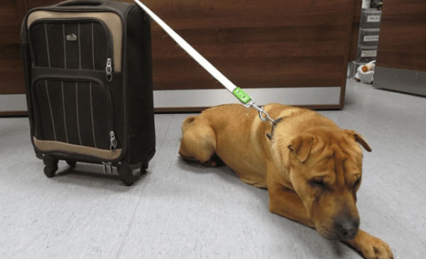собаку бросили на вокзале 1