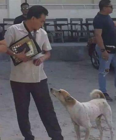 пес ждет хозяина 2