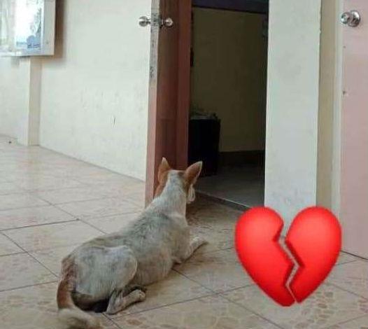 пес ждет хозяина 3